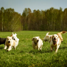Off-Leash Group Adventure Hikes