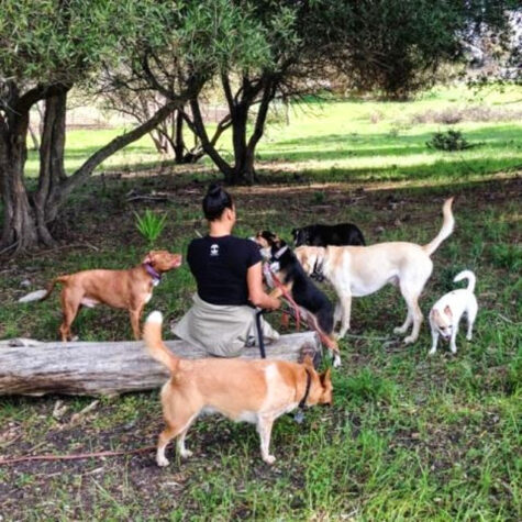 Maya taking dogs on an adventure hike